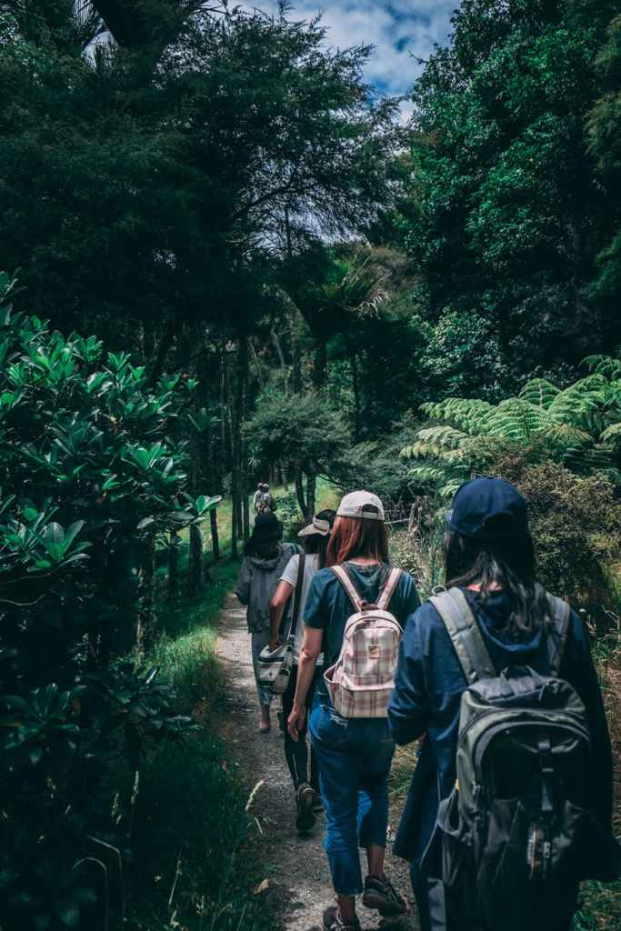 people wearing backpacks walking on pathway near green leaf plants